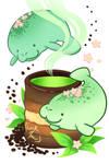 Sweet series: Mana-tea