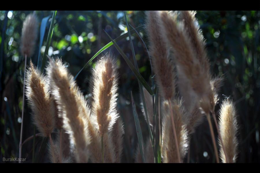 hairy2 by Birkk