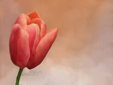 tulips with background