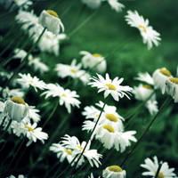 I Need a Pocketful of Sunshine by DismayedSense