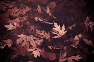 Timeless Season by DismayedSense