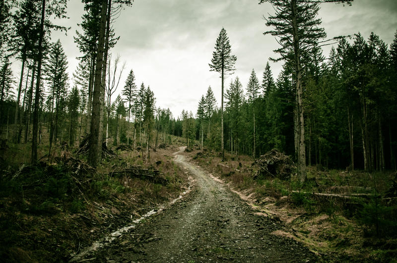 Tiger Mountain Summit by DismayedSense