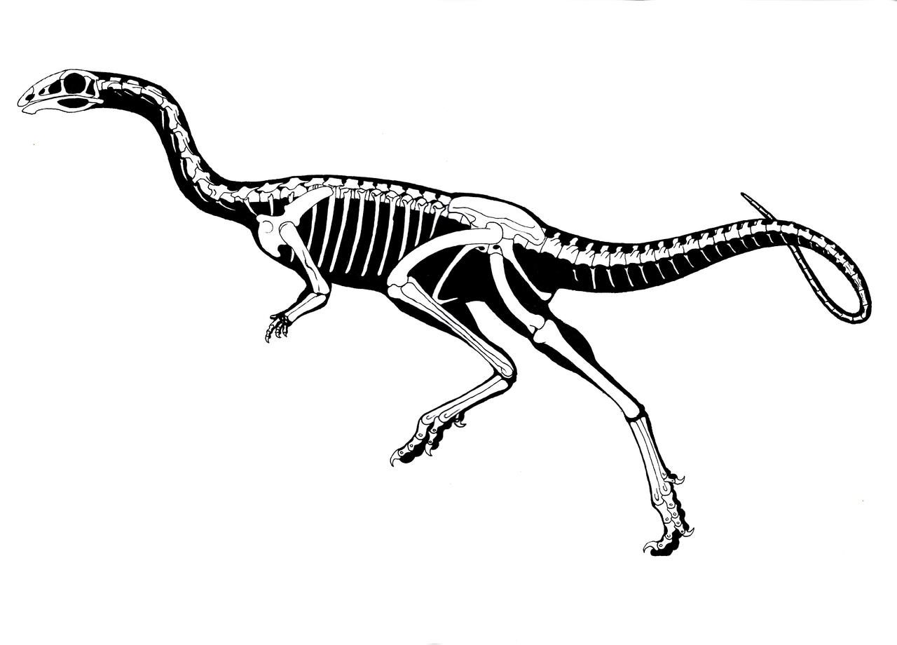 Limusaurus inextricabilis