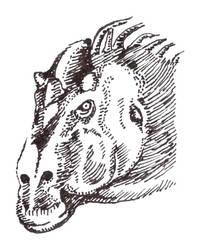 Trachodon