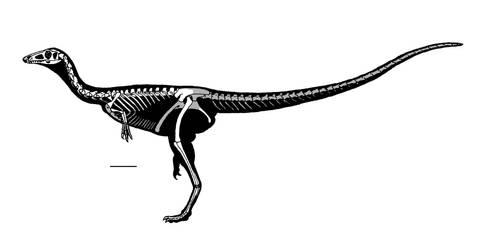 Panguraptor lufengensis by reminegrest