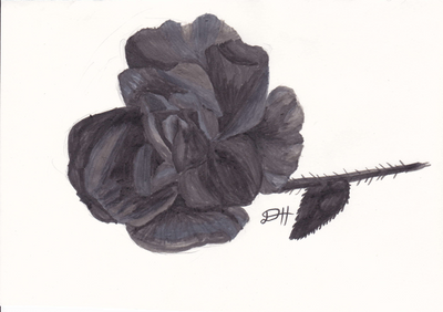 Marker Rose by Diehardstormhawksfan