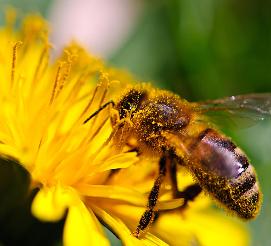 Busy Bee by Kamyria