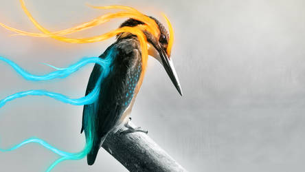 Kingfisher (Wallpaper) by Dessins-Fantastiques