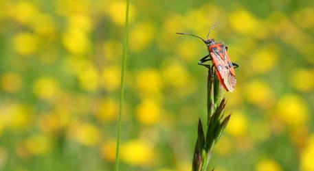 Bug by rivieh