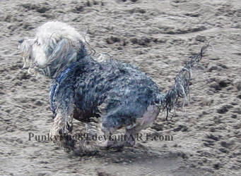Tiny Muddy Puppy by PunkyPug89