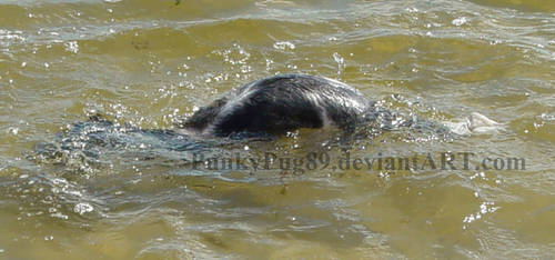 Otter Dog by PunkyPug89