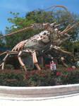 Big Shrimp