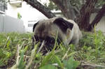 Grassy Snuggles