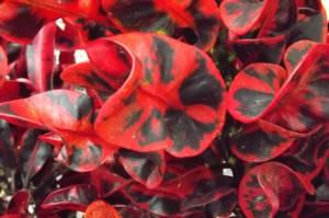 Red/Black Bush - 2 by PunkyPug89