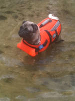 Swimmin' Puggy