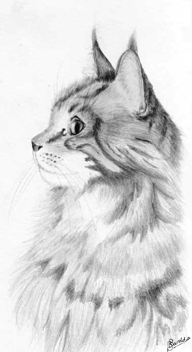 Maine_coon_by_Celvaya additionally realistic puppy coloring pages on realistic puppy coloring pages furthermore realistic puppy coloring pages 2 on realistic puppy coloring pages including realistic puppy coloring pages 3 on realistic puppy coloring pages additionally realistic puppy coloring pages 4 on realistic puppy coloring pages