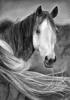 Grey by Celvaya