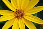 yellow by rhiannonrain