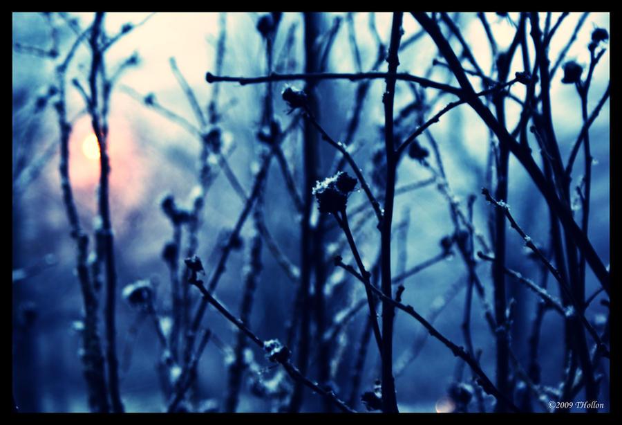 snow lights by rhiannonrain