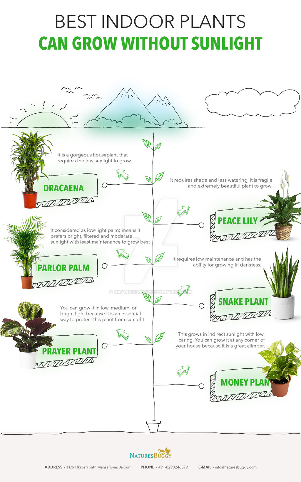 Best Indoor Plants Can Grow Without Sunlight By Naturesbuggy On Deviantart,Kitchen Countertop Paint