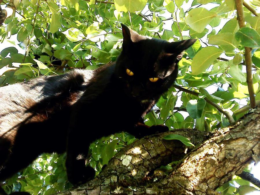 black cat in tree 2 by minaw on deviantart. Black Bedroom Furniture Sets. Home Design Ideas