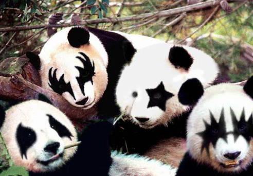 panda kiss by cooldesing