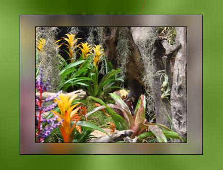 Bromeliads by printsILike