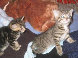 Kittens by bwmirror