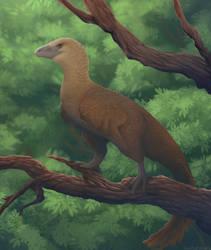 archaeopteryx [timelapse]