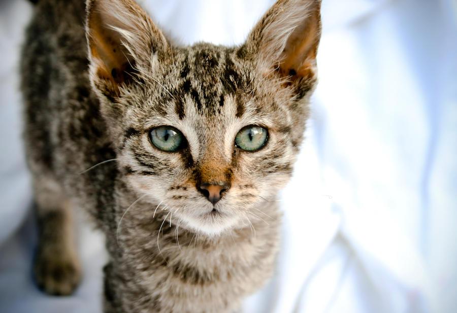 el gato by mizho