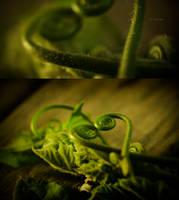Love is Green by mizho