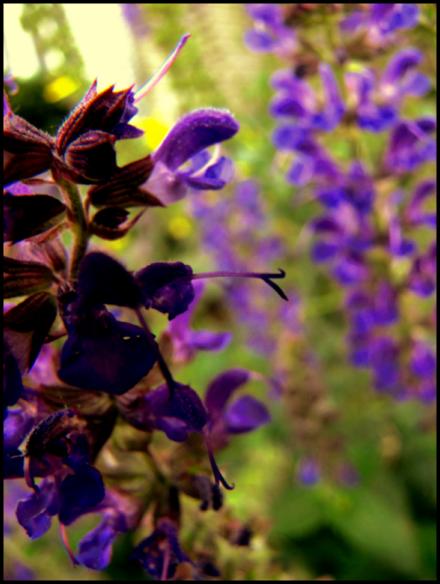 dreaming in purple by digitaltvirus