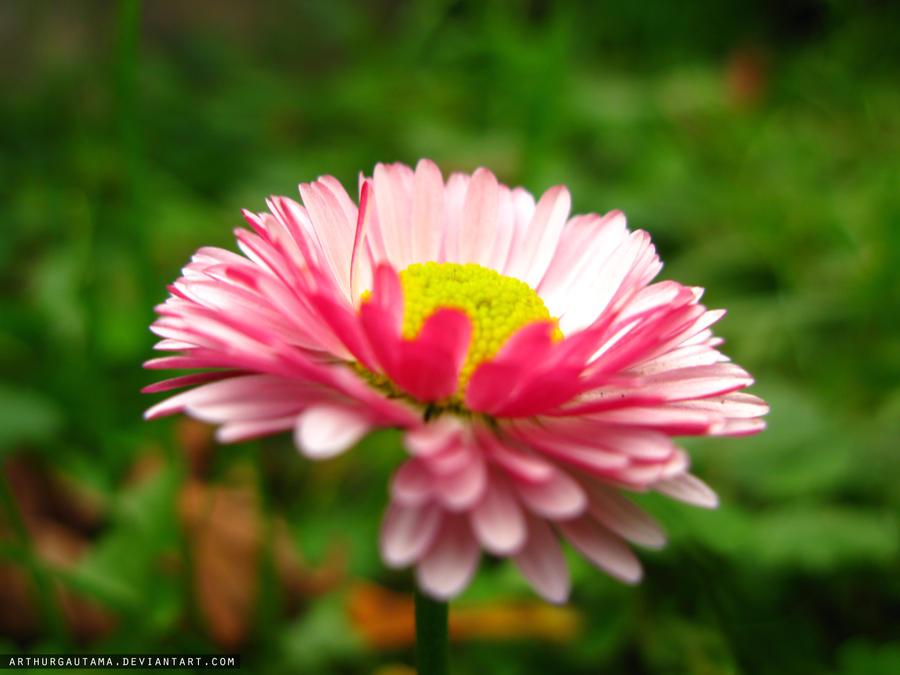 Flower by ArthurGautama