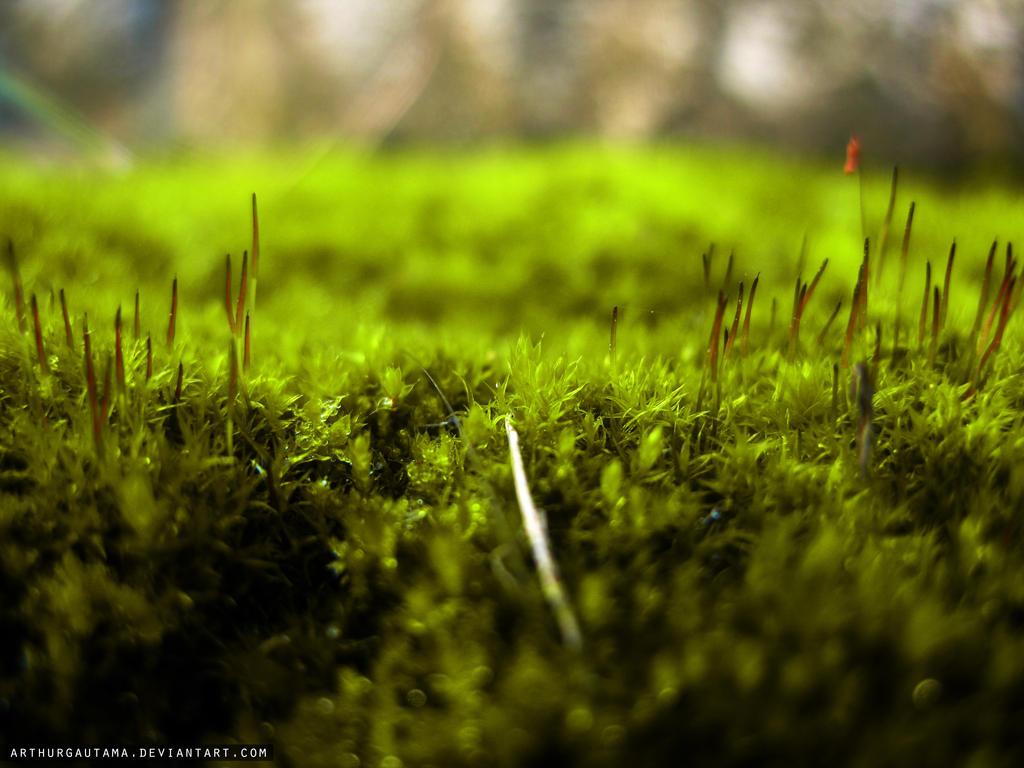 Moss by ArthurGautama