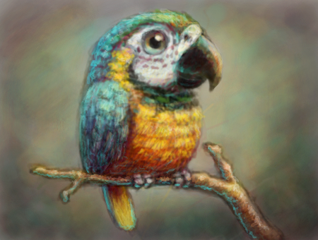 Blue and Gold Macaw by Cortoony