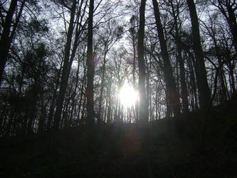 Sun through the trees at Valley Green