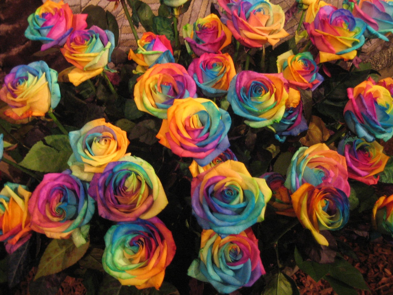 rainbow roses by janine42584 on deviantart