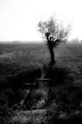no.where or now.here by rodrigopivoto