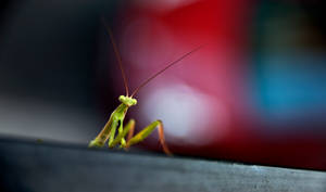 a little friend by panosozi
