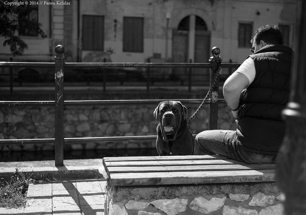 dogs look by panosozi