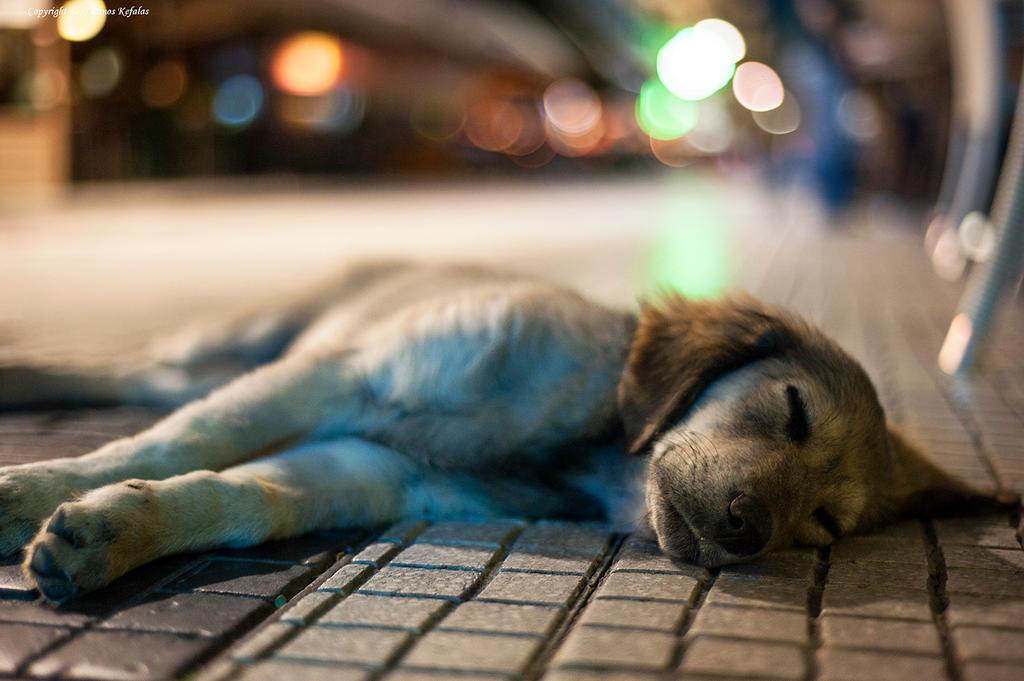 street dog 2 by panosozi