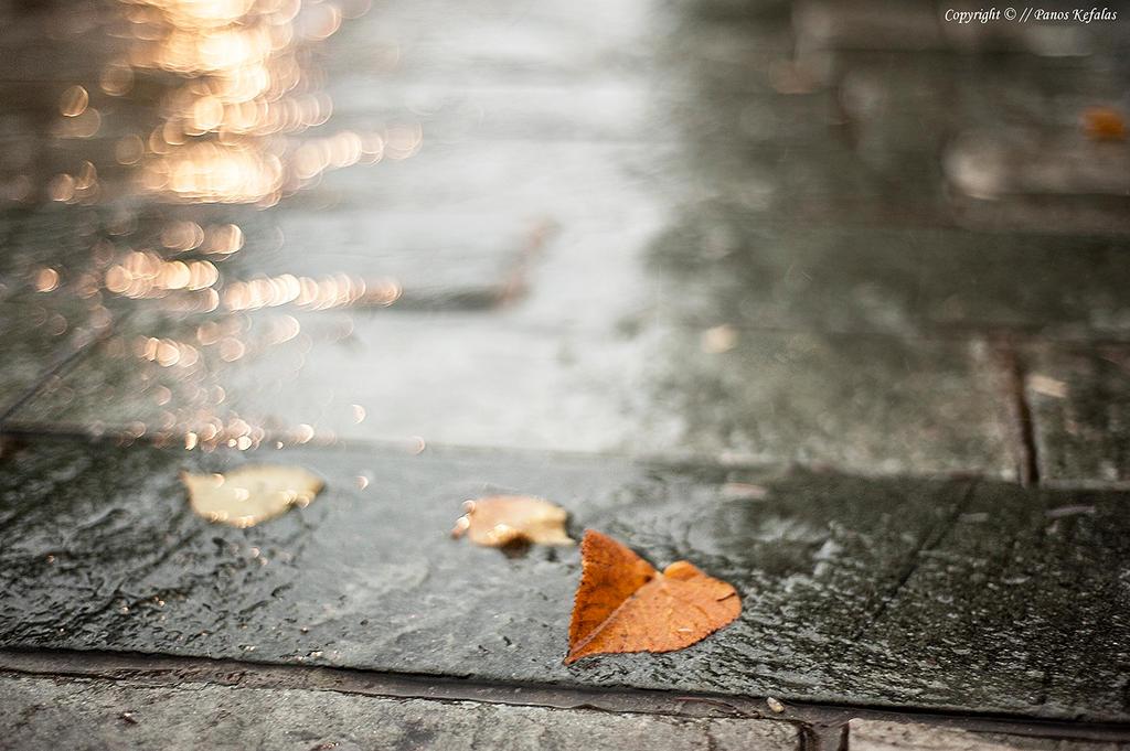 autumn love by panosozi