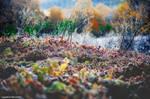 morning hoar-frost by panosozi