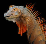 Iguana Brachiosaurus