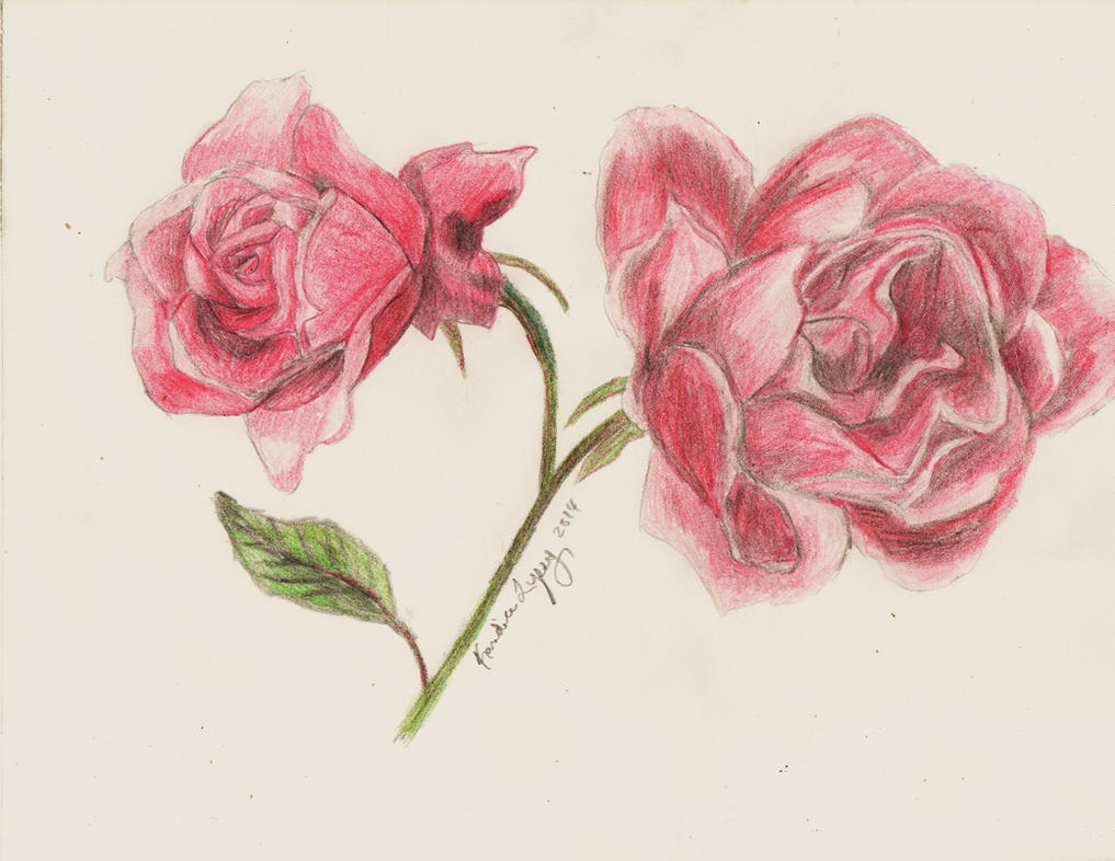 Red Roses by redstarrose