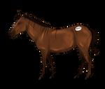 Zebroids-Equus Auction Colt    Free Import