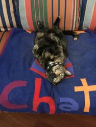Chatty Catty by ForestBugDA