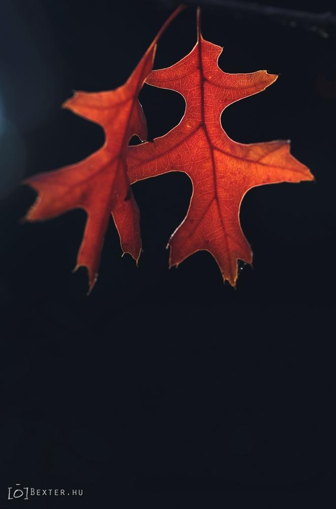 leaves by SiDiusBexter