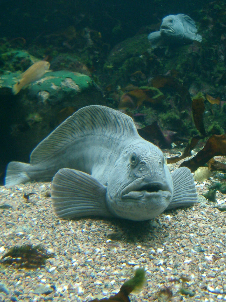 Ugly Fish. by barkingstock4u