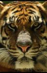 Sumatran_5067